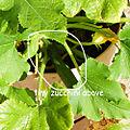 Veg Squash-Tiny-Zucchini