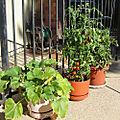 Veg Squash-and-Tomatoes