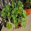 Veg Squash-Zucchini