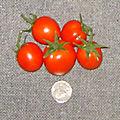 Veg-Tomatoe-Tiny-Early-Girls
