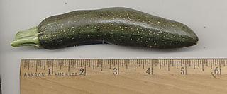 Veg--Zucchini