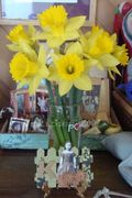 Daffodils-from-dad-2009